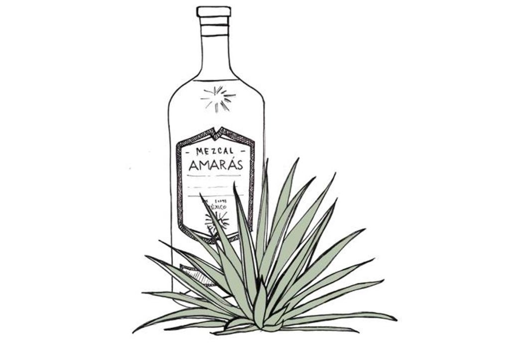 mezcal-amaras-varieties-of-mezcal